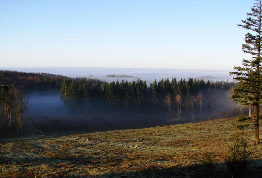 hle tea landscape